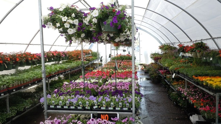 flowers-164814_1280