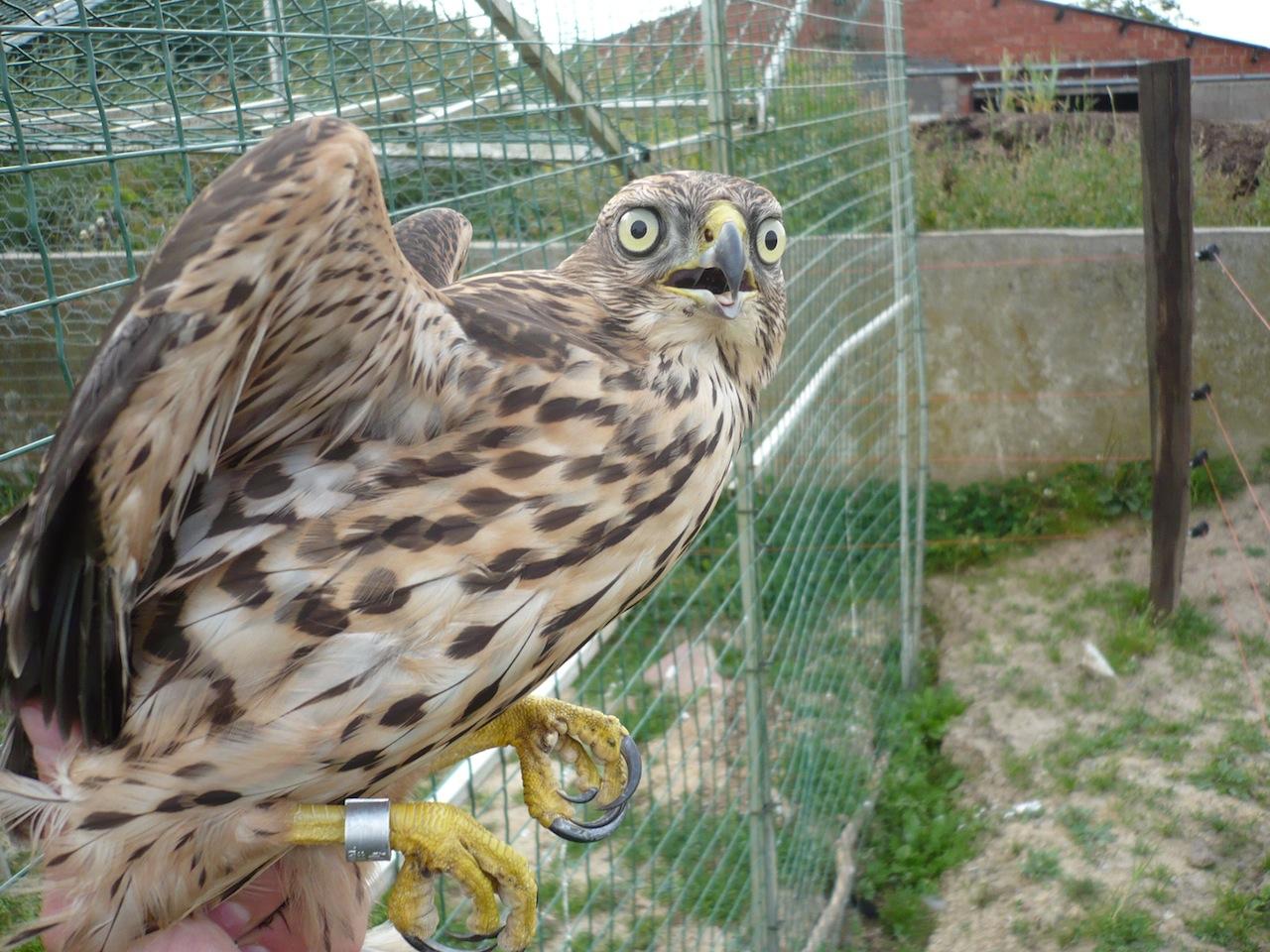 ornithologue